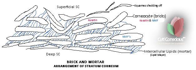 brick-and-motor